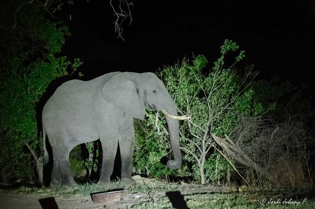Elefante nocturno en Third Bridge