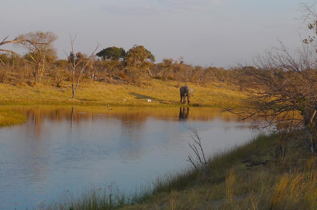 Elefante junto al río en Savuti.
