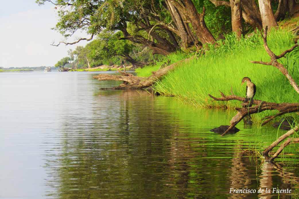 Paisaje de Chobe River Front.
