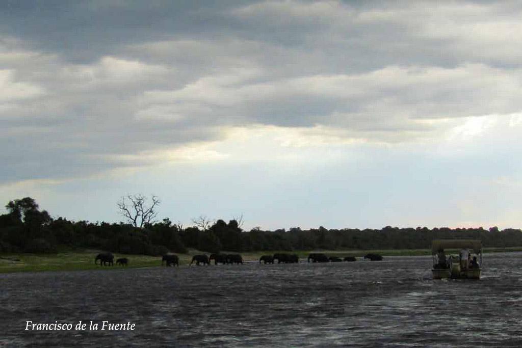 Elefantes cruzando el río Chobe.