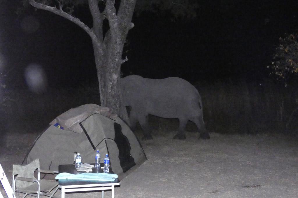 Elefante nocturno en Xakanaxa.