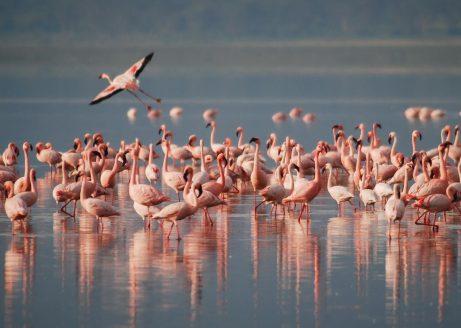 Flamencos en Nata Bird Sanctuary.