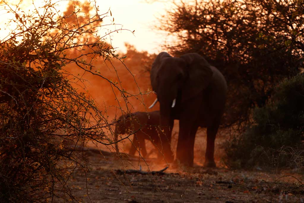 Elefantes entre el polvo del camino en Letaba, Kruger N.P.