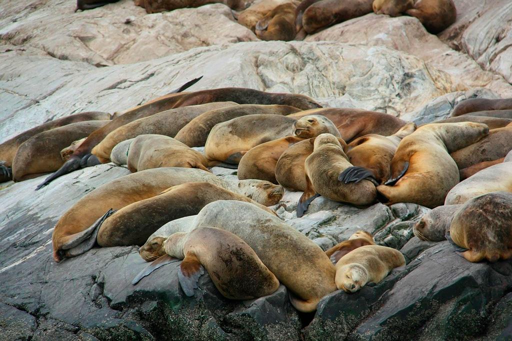 Colonia de focas en Cape Cross.